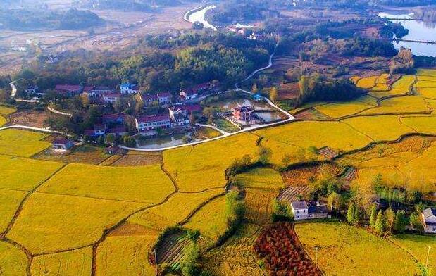 全球危机与中国的乡村振兴
