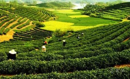 政策解读:新农村土地经营权流转管理办法将3月1日起施行