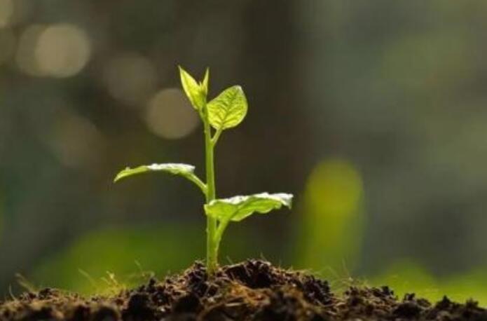 有机肥生产试点项目申报指南