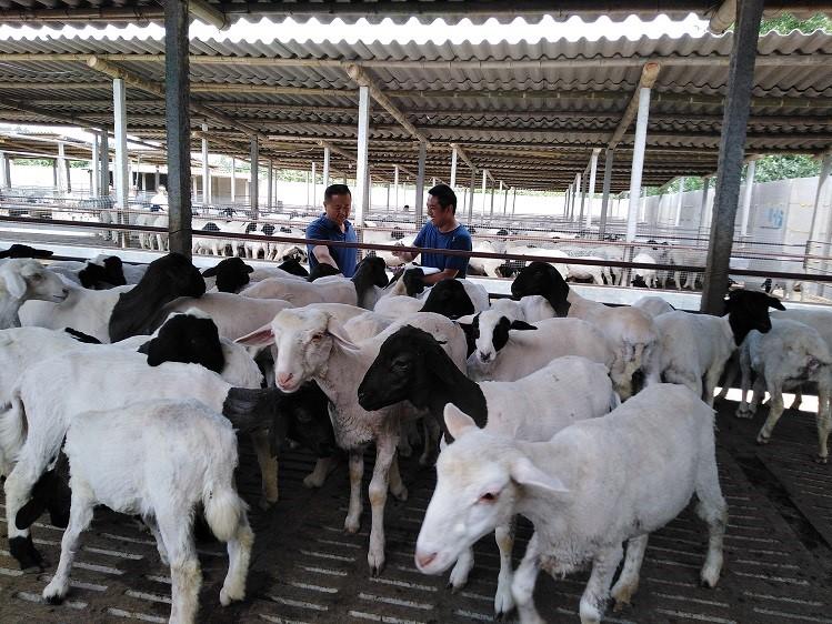 山东冠县:畜牧养殖助力乡村振兴