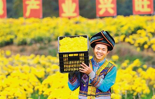 花卉产业助力乡村振兴