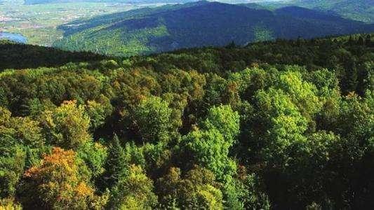 发展林业经济促进乡村振兴战略实施的策略