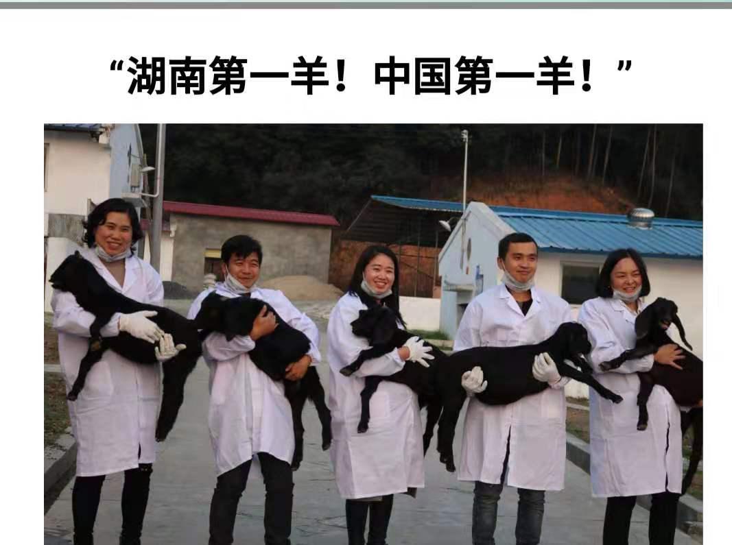 湖南鸿运牧业;湖南第一羊、中国第一羊