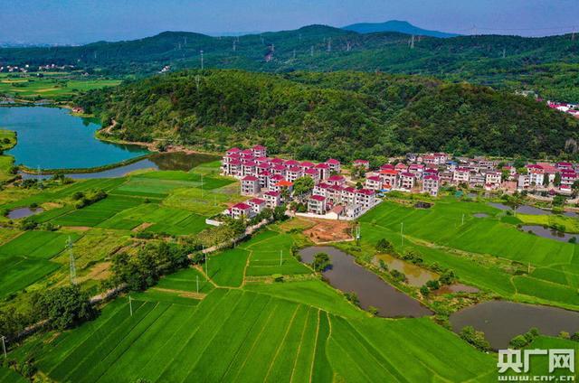 江西泰和:美丽乡村 生态宜居